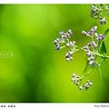 IMG_4572-fb