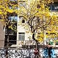 南寧街2014-17.jpg