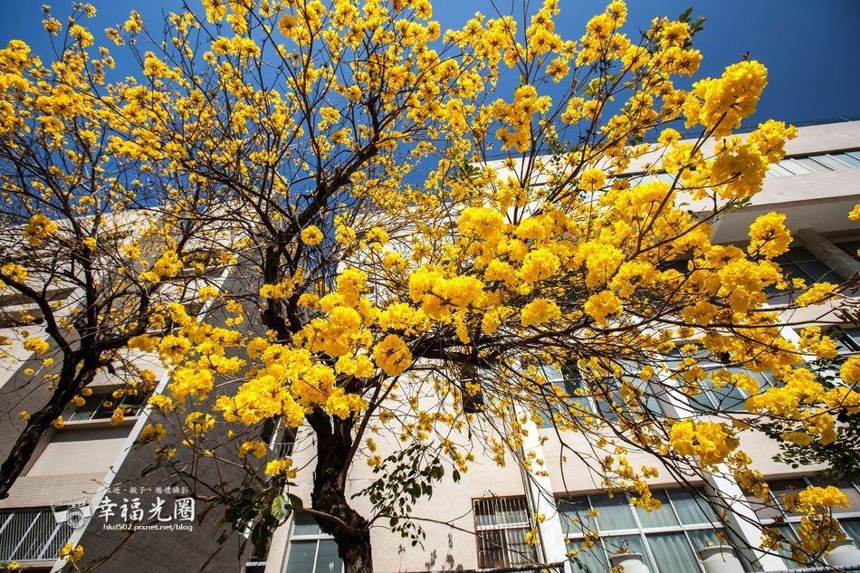 南寧街2014-23.jpg