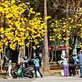 林森-三角公園223.jpg