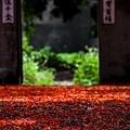 番茄蜜會社-148.jpg