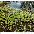 巴克禮公園-102.jpg