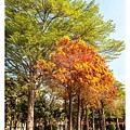 巴克禮公園-113.jpg