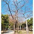 巴克禮公園-114.jpg