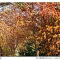 巴克禮公園-206.jpg