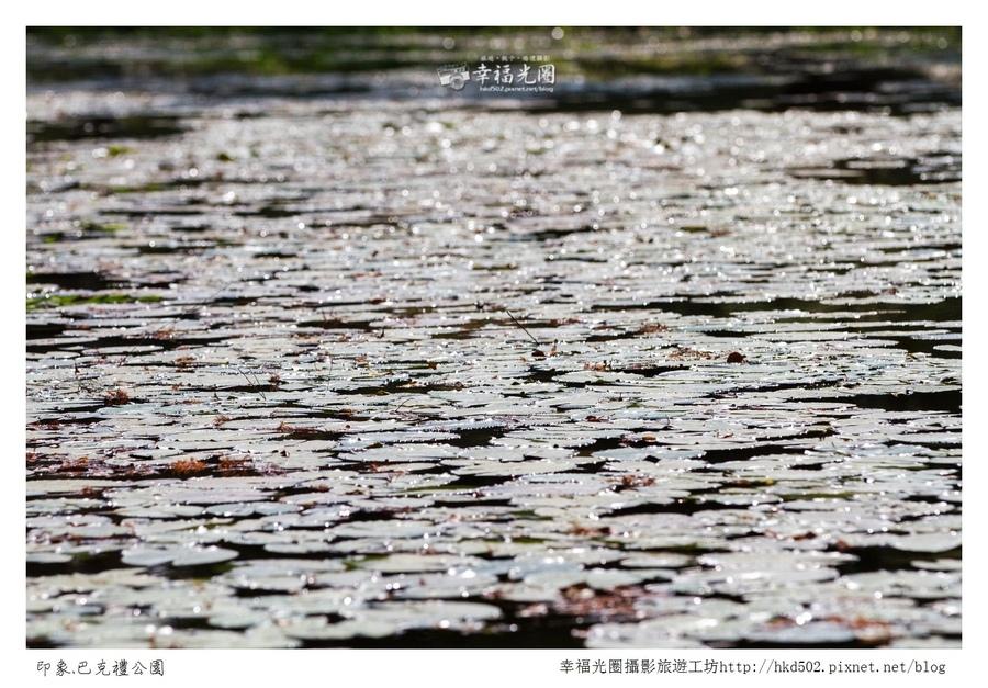 巴克禮公園-211.jpg