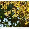 巴克禮公園-226.jpg