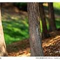 巴克禮公園-235.jpg