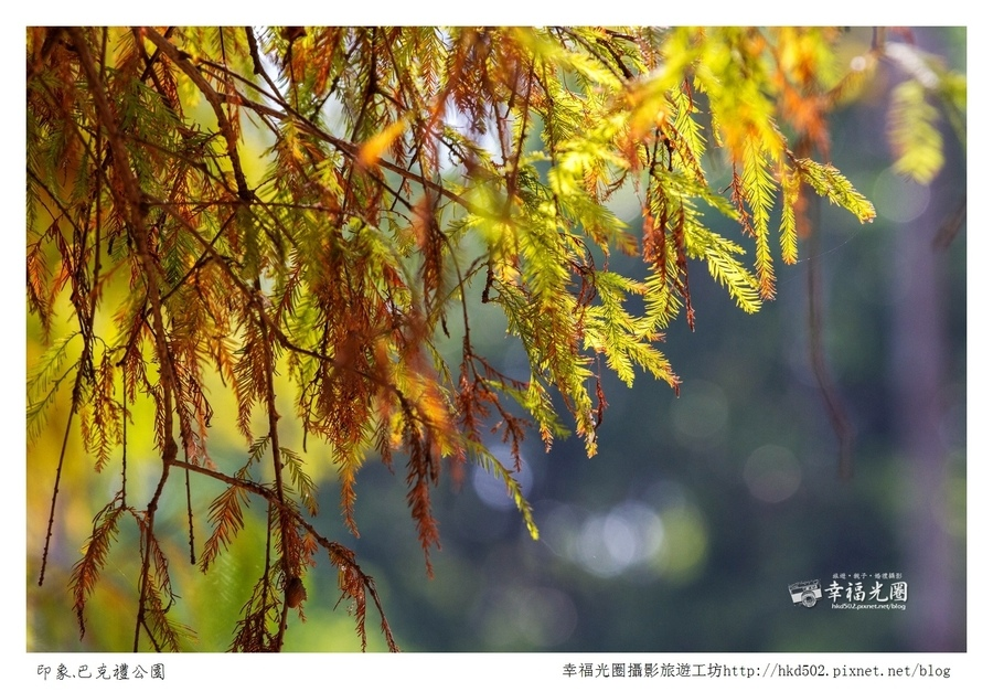 巴克禮公園-236.jpg
