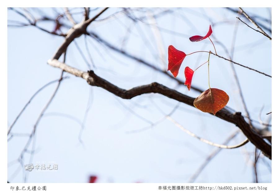 巴克禮公園-243.jpg