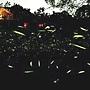 螢火蟲.jpg