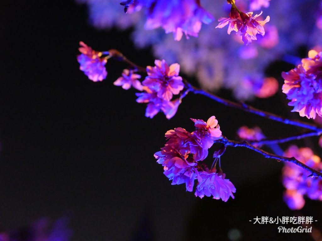 PhotoGridLite_1582986588833.jpg