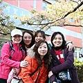 阿里山派出所前方的櫻花也很有名
