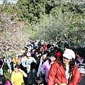 櫻花樹沿線步道人多,加上天氣晴朗,感覺非常熱