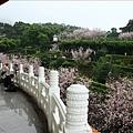 天壇後方的吉野櫻也都開花了