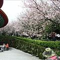 這一區吉野櫻最早開花