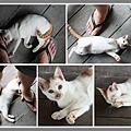 貓01.jpg