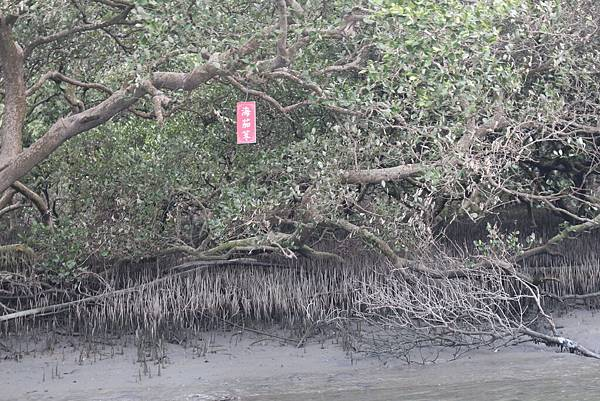 台江生態之旅