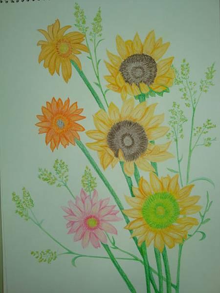 彩色素描-太陽花