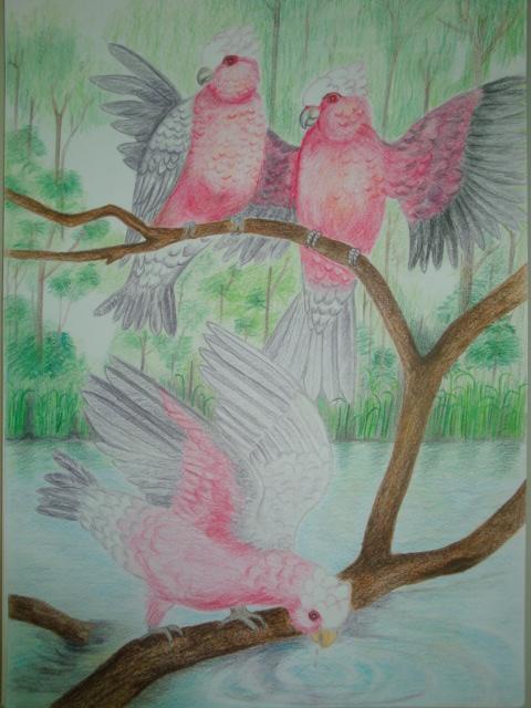 彩色素描-雨林鸚鵡