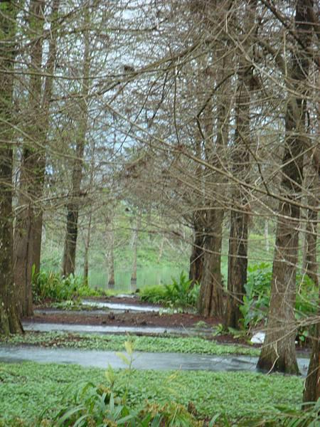 林間涓涓小溪