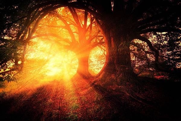 trees-2562083_1280.jpg
