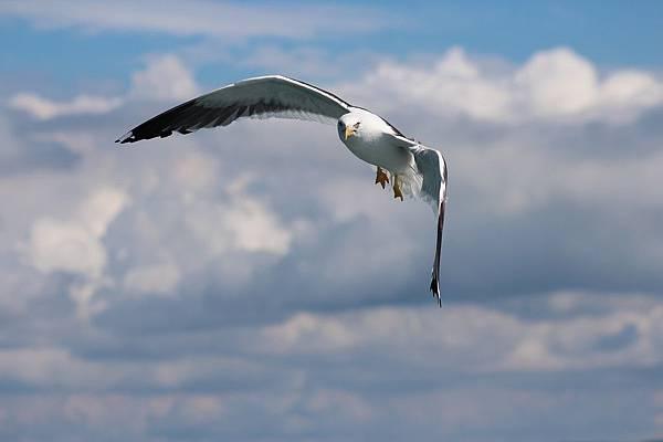 bird-3153717_1280.jpg