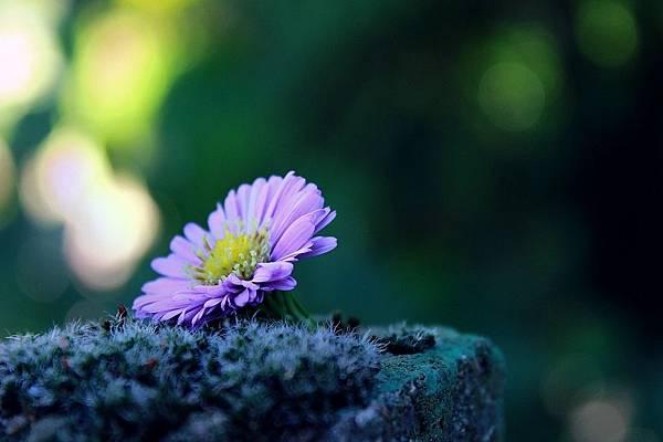 flower-1739892_1280.jpg