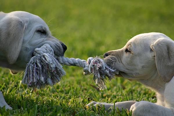 puppy-1647692_1920.jpg