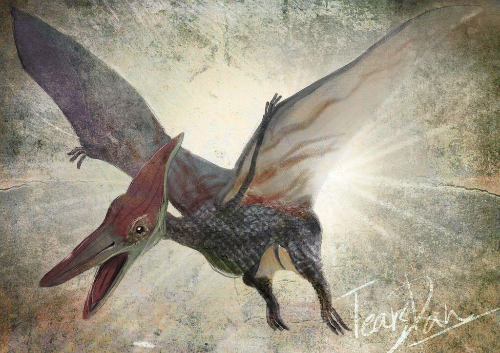 侏儸紀世界Jurassic Park-無齒翼龍Pteranodon-婁丹雲(淚丹-TearsDan).jpg
