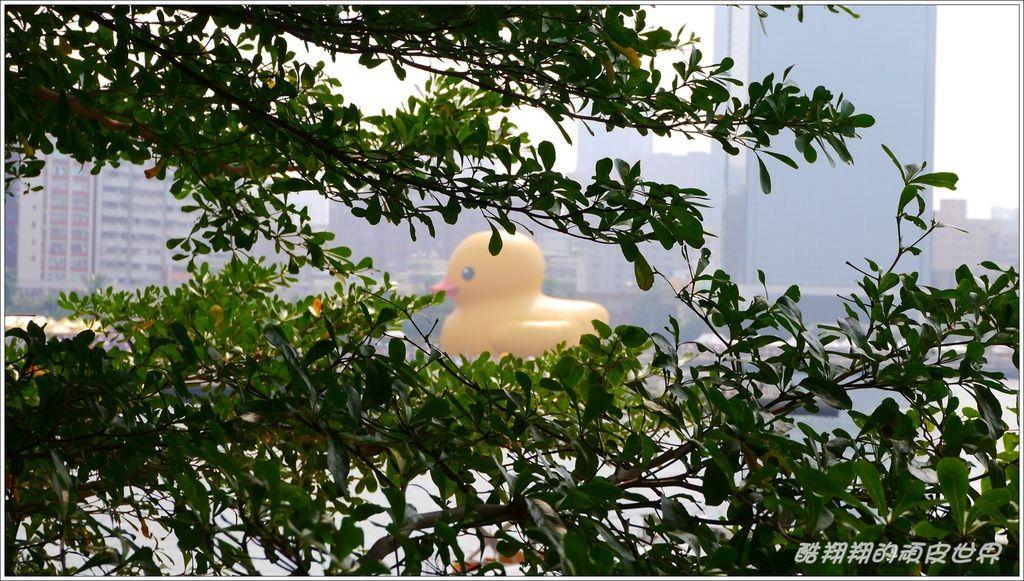 黃色小鴨19.jpg