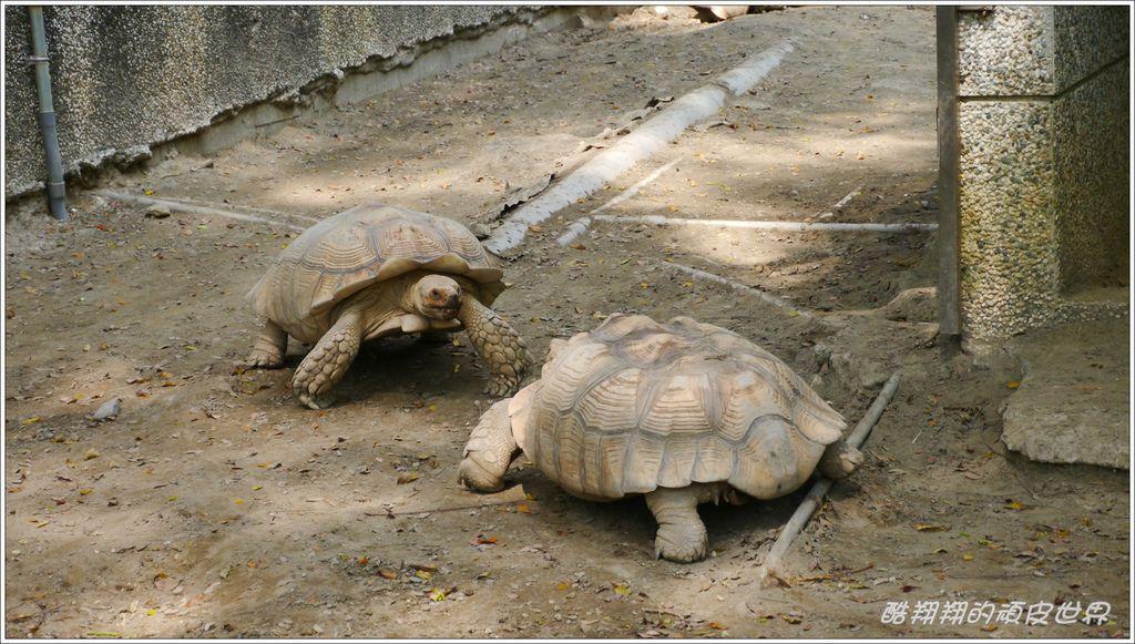 壽山動物園06.jpg