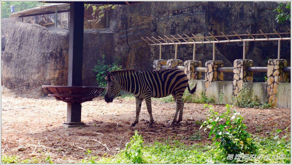 壽山動物園07.jpg