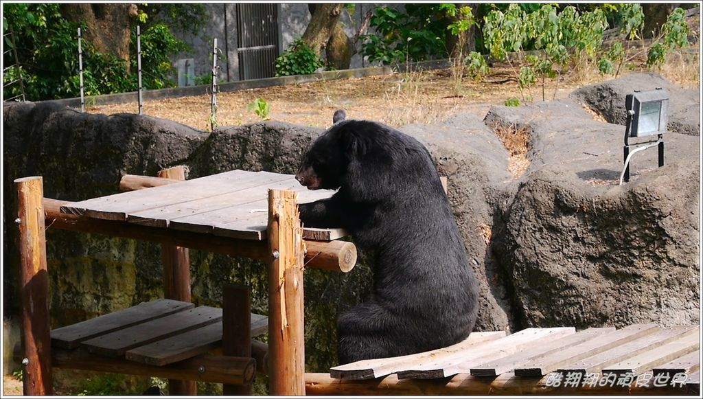 壽山動物園12.jpg