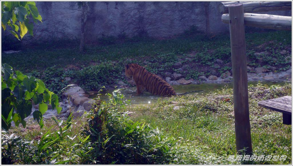 壽山動物園20.jpg