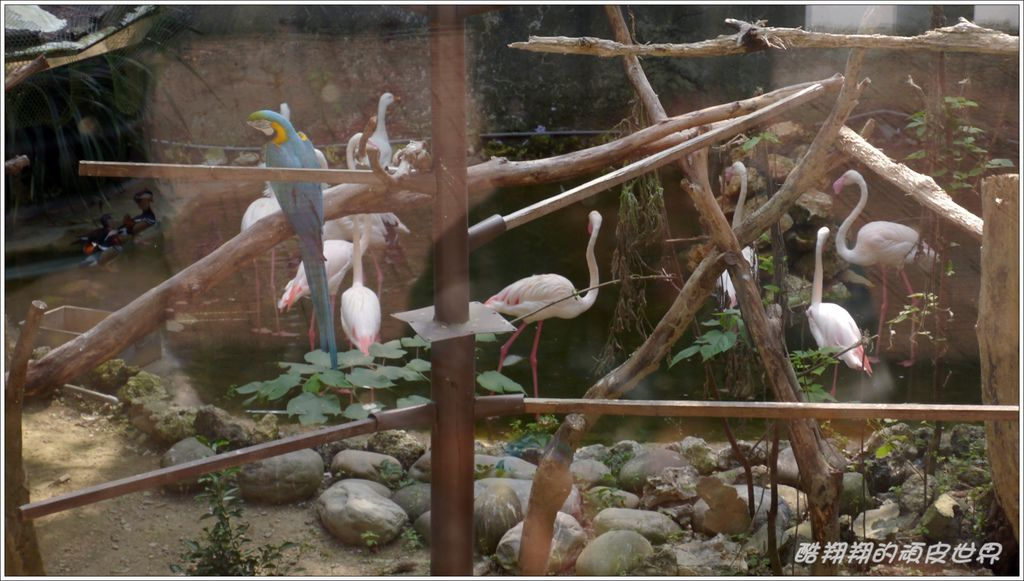 壽山動物園23.jpg