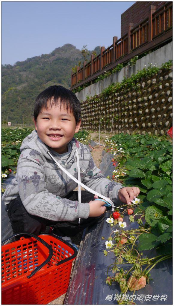 晶晶草莓園05.JPG