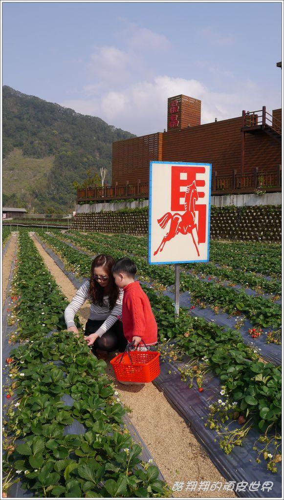 晶晶草莓園07.JPG