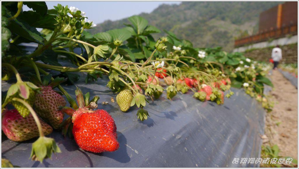 晶晶草莓園10.JPG