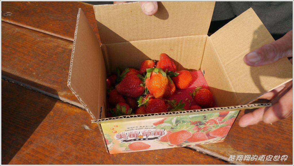 晶晶草莓園11.JPG