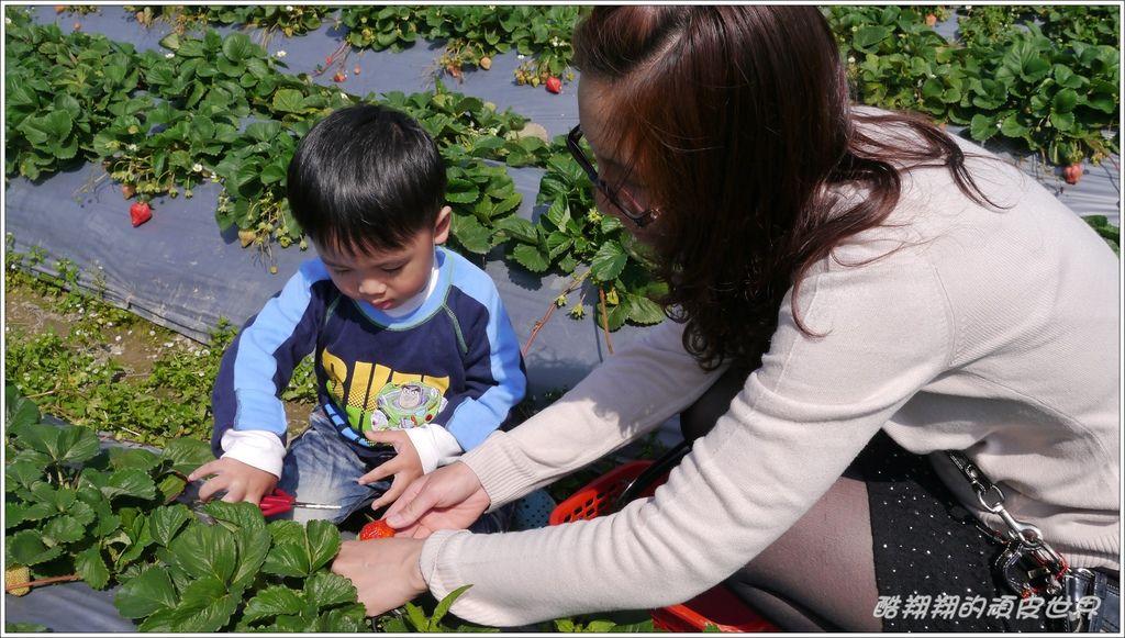 甜心草莓園05.JPG