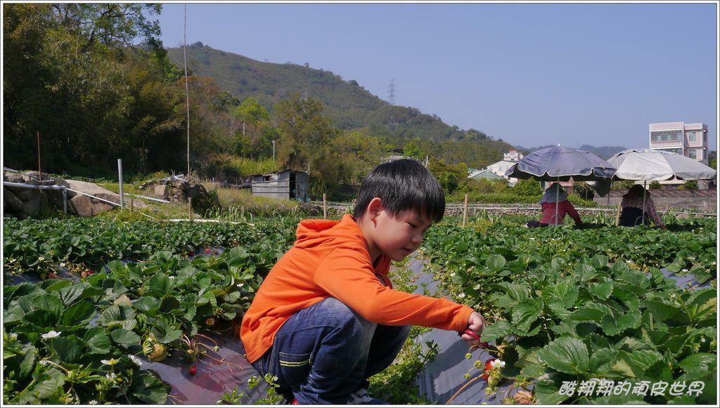 甜心草莓園06.JPG