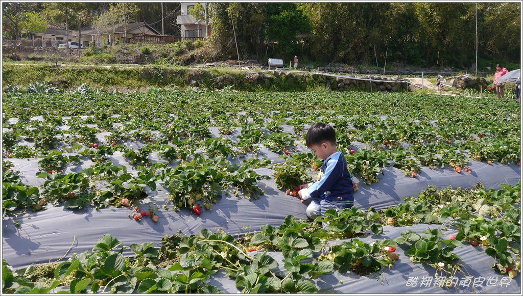 甜心草莓園08.JPG