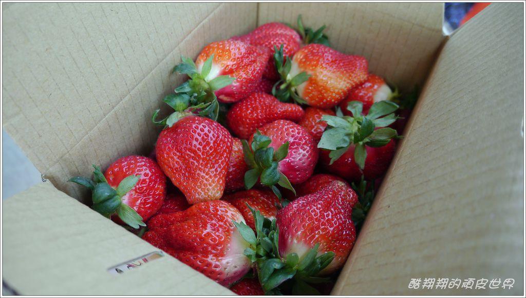 甜心草莓園09.JPG