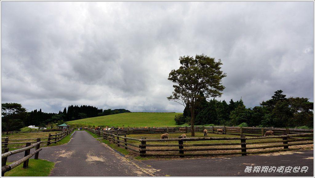 高千穗牧場-23.JPG