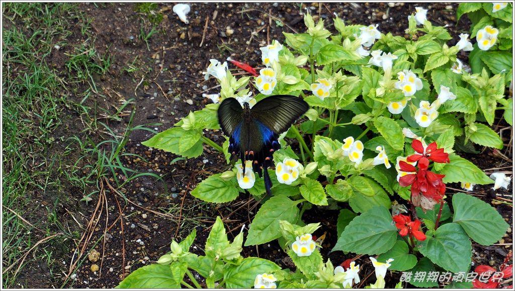 Florante花園-15.JPG