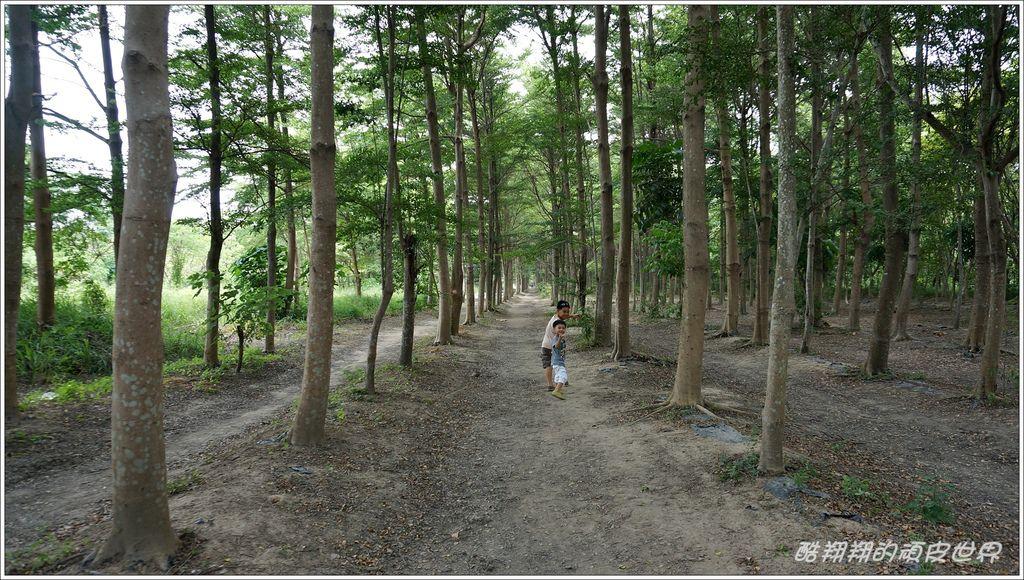 虎山林道-04.JPG