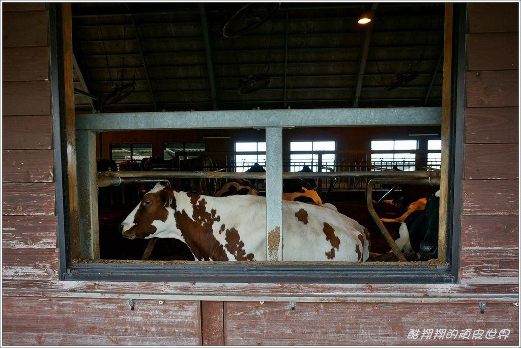 阿蘇牛奶牧場-11.JPG