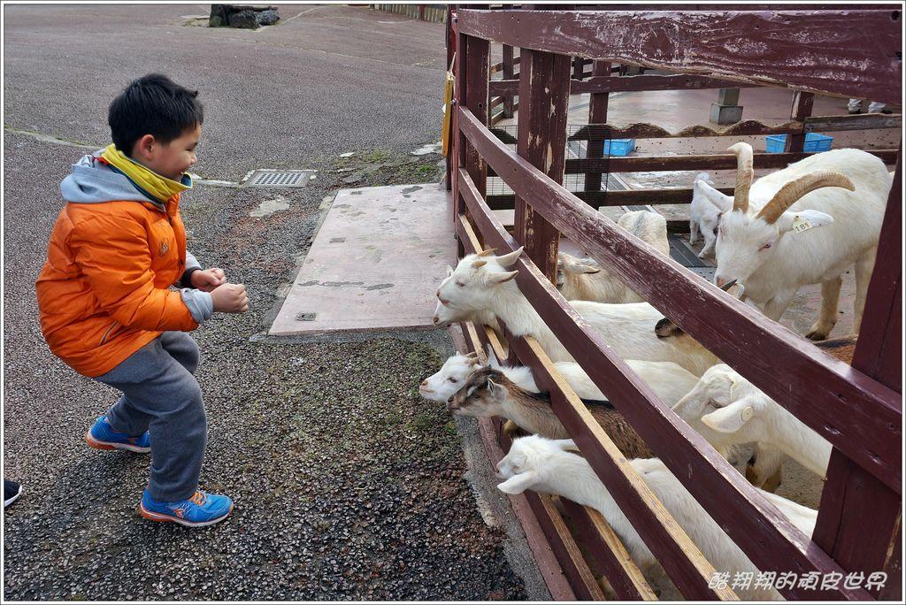 阿蘇牛奶牧場-15.JPG