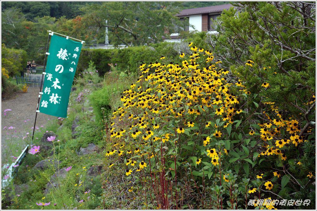忍野八海-14.JPG